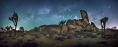 Joshua Tree National Park (Gavin Hardcastle - Fototripper) Tags: california tree night way stars photography joshua space astro galaxy astrophotography milky milkyway gavinhardcastle fototripper