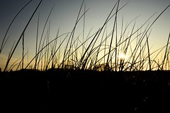 #stripes (SaltyDogPhoto) Tags: ocean morning light sunset beach grass silhouette sunrise reeds gold golden newjersey nikon glow shadows stripes nj nikkor wildwood lightandshadow nikonphotography nikond7200 saltydogphoto nikkor1680mmf284eedvr