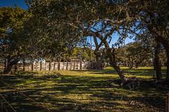 Happy Fence Friday! (Jims_photos) Tags: trees landscape outside texas shadows adobephotoshop outdoor nopeople daytime sunnyday lightroom oldfence jimallen adobelightroom wimberleytexas fencefriday nikon7100