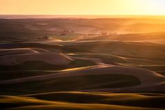 Grass Dunes (DMontalbano) Tags: county travel light sunset summer sky sun green dan beautiful field grass clouds photography washington state farm wheat hills tuscany whitman colfax palouse montalbano 500px