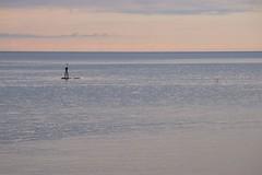 Reierskjer i Juni (Sven LP) Tags: coast norge outdoor