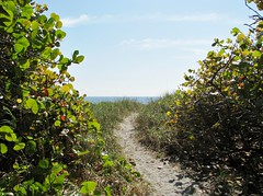 Path to the sea 6654 (Tangled Bank) Tags: ocean park county wild beach nature natural florida palm atlantic shore area preserve delray
