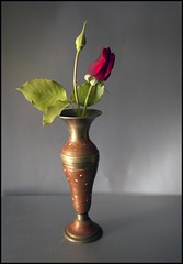 Brass (Denis Fox) Tags: red rose brass 2014 denisfox