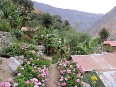 Colca Canyon-62
