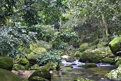 Escorrenta (ramosblancor) Tags: brazil naturaleza nature brasil ro river de grande rainforest janeiro selva tropical ilha mata atlntica