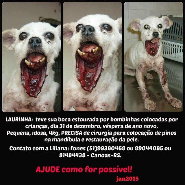Laurinha, cadelinha idosa: crianças estouraram sua boca com bombinhas!!! Quadro de dor e horror!!!! Precisa urgente de ajuda para cirurgia. (Liliana) (Canoas/RS)
