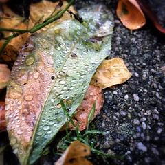 Farbenspiel mit Morgentau. | Colourful with morningdew.  #morning#dew #dewdrops #deutschland #travel #travelblog #travelingram #traveltheworld #enjoy #hoorayfortoday #herbst #herbst2014 #autumn #fall #hooray #cloverleaf #clear #cold #morgen #tau #morgenta