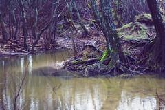 The Swamp (vdaukantas) Tags: forest swamp lithuania karkle