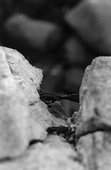 Cobweb and Rusted Iron (Heibergl) Tags: ocean sea white black cold fall love film analog concrete photography rust iron waves walk cobweb story fragile shortstory brokenheart breakup reporting heartbroken sønderborg washedaway