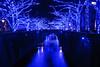 blue night - winter (picturesque-y) Tags: street blue trees winter japan night river tokyo streetlight stream nightlights illumination led meguro blueled