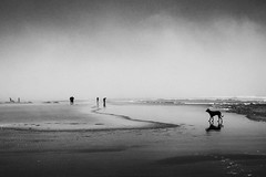 Cannon Beach (. Jianwei .) Tags: morning travel dog silhouette fog seaside cannonbeach nex kemily