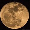 #تصوير_القمر #البدر #قمرية #قماري #عبري #الدبيشي #حلة_النيايرة #برد #مساء_الليل #صباح_الخير_بالليل #براري_عمان #عمان #الظاهرة #طبيعة_عمان#ياسر_النيري #النيري #ياسر #moon #night #night_moon #good_morning (omanwild_photo) Tags: moon night goodmorning عمان nightmoon برد البدر ياسر قمرية قماري عبري الظاهرة تصويرالقمر براريعمان الدبيشي ياسرالنيري طبيعةعمان حلةالنيايرة مساءالليل صباحالخيربالليل النيري