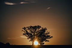 árboles del amanecer (emiliokuffer) Tags: trees summer sky sun sol sunrise landscape countryside árboles horizon clear cielo verano contraste