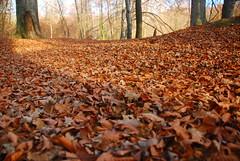 Carpet (jarok2012) Tags: autumn leafs jarok2012