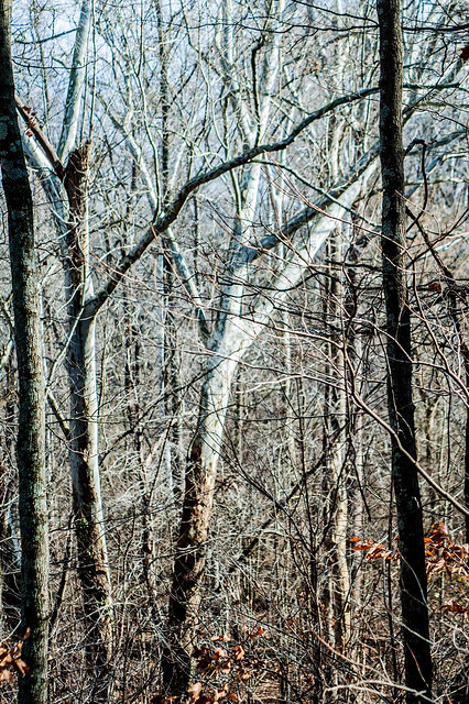 Pike State Forest - November 25, 2014