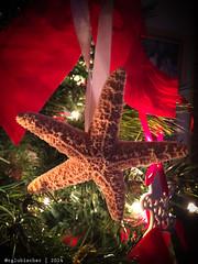 Christmas Starfish (RGL_Photography) Tags: newjersey unitedstates starfish christmastree ornaments merrychristmas jerseyshore christmasornaments otannenbaum christmas2014 iphone6plus thingsoniphone6plus
