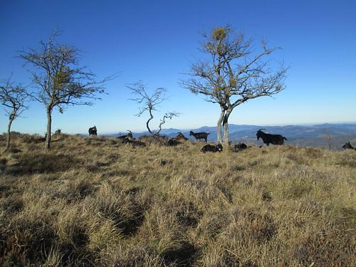monte-santiago-senderismo-sermar-valladolid-ruta365 (15)