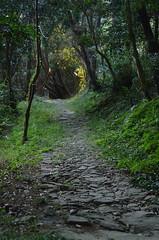 (ohimiro.) Tags: light tree green nikon shrine path    d5100
