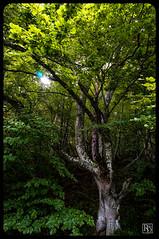 Arbre (R.Didier) Tags: foret arbre feuille