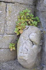 """Old Carved Head in Athenry Priory (Gaeilge Bheo) Tags: ireland irish galway church abbey saint stone paul photography photo cool ruins pretty dominican ruin chapel images carving norman carve peter gaeilge impressive priory connacht nofilter facebook photooftheday picoftheday linkedin athenry art"""" éire history"""" day"""" """"photo """"best twitter """"high ireland"""" """"irish allshots """"pic bestoftheday """"tourist """"tourism """"visiting pinterest """"instagram instagramers instadaily igdaily instagood instamood instago """"fergal jennings"""" res"""" resolution"""" """"sighseeing ireland"""" ferghalj pintergy"""