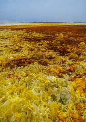 The colorful volcanic landscape of dallol in the danakil depression, Afar region, Dallol, Ethiopia (Eric Lafforgue) Tags: africa travel lake color tourism nature pool beauty vertical landscape outdoors volcano spring colorful solitude day desert natural earth acid horizon surreal nobody nopeople formation serenity heat minerals environment sulphur isolation geography geology ethiopia hotspring volcanic saline geothermal interest arid ecosystem hornofafrica afar eastafrica geological abyssinia afarregion dallol danakildepression ethio161940