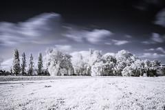 Local park (blackwoodse6) Tags: blue white clouds ir sony bluesky infrared falsecolour hoyar72 infraredphotography 720nm sonya700