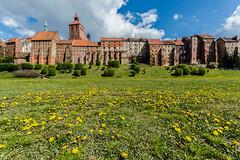 Grudzidz (Bless your life) Tags: cityscape gothic poland polska medieval grudziadz grudzidz