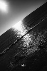 horizontes (betho itinerante) Tags: pez luz sol azul libertad mar agua playa dia movimiento bn ave cielo pico alas aire horizonte blanconegro plumas altocontraste