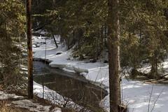 Johnston Creek, Johnston Canyon, Banff, Alberta (Jim 03) Tags: blue lake snow mountains ice wall creek river melting path turquoise jim canyon louise covered alberta bow banff icicles johnston jimhoffman jhoffman jim03 wwwflickrcomphotosjhoffman2013 wwwjimahoffmancom