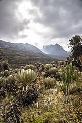 COCUY COLOMBIA (FOTOS-GRAFOS) Tags: verde plantas colombia nevada paisaje sierra belleza geografia frailejon cocuy conservacin