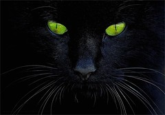 She Is Hypnotic (Konny D.) Tags: cat katze gatto