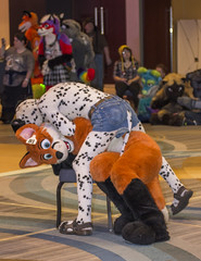 _DSC3386 (Acrufox) Tags: midwest furfest 2015 furry convention december hyatt regency ohare rosemont chicago illinois acrufox fursuit fursuiting mff2015