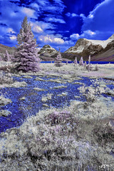DSC_0038-EditFAA (john.cote58) Tags: trees sky foothills lake snow canada mountains cold nature water field pine clouds creek forest landscape ir rockies outside outdoors stream surreal brush glacier alberta infrared bushes icefieldsparkway crowfoot
