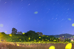 Ropa Valley in light of fireflies (Bill-Metallinos) Tags: travel sky night photography islands nightscape traces greece stellar astrophotography astronomy nightsky corfu zakynthos startrails astrophoto fireflies periphery ionian metallinos prefecure astrolandscape astrocorfu