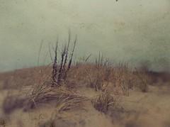 Calm Breeze (BLACK EYED SUZY) Tags: dunes sand grass tadaa mextures beach iphone