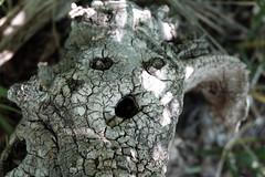 The Old Gods (karl.joseph.williamson) Tags: gods face nature