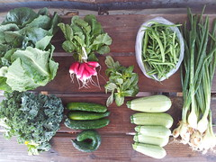 Suzie's CSA Box, May 23 - 29