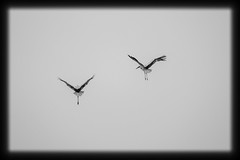 fly with me (martin_rehberg) Tags: