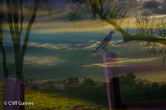 IMG_4090.jpg (CliffGaines) Tags: nature sunrise day97 6d arroyoverde multiexposures 24105mm photoseveryday