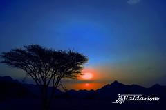 Beauty of Sunrise (haidarism (Ahmed Alhaidari)) Tags: yellow blue silhouette tree plant bokeh outdoor nature depthoffield sonya65 macro macrophotography sun sunrise sunset art artisitc create creative creation greatphotographers