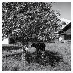 175/366 black white day (tideloon) Tags: entwicklung 16mm fujinonxf16mmf14rwr 2016 june blackandwhite blackwhiteday 366the2016edition 3662016 366dayproject fujifilm fujifilmxe2