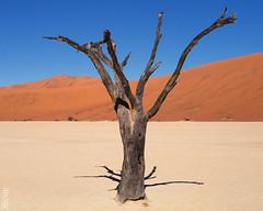 Dead Vlei (Dan de Kadt) Tags: dunes dune naturallight olympus namibia sanddunes omd namib deadvlei namibdesert em5 panasonicleica25mmf14 panaleica25mm panasonicleica25mm olympusem5 namibianwinter