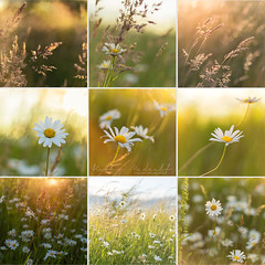 Daisy Montage (Kathy ~ FineArt-Landscapes) Tags: daisy flowers light sunshine sunlight bright cheerful summer grasses meadow nature nottinghamshire gedlingcountrypark