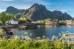 Svinøya (Maria-H) Tags: norway no panasonic svolvær lofotenislands 1235 nordland svinøya rorbu gh4 dmcgh4