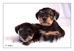 Mis nuevos vecinos... (pilcaber) Tags: mascotas perros amistad fidelidad pet dog fidelity friendship