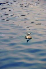 My private island (Rick Elkins Trip Photos) Tags: mumbai maharashtra india seagull humor