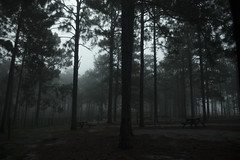 Morning Fog (megancollante) Tags: morning trees nature fog scary woods mysterious erie atmospheric