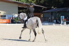 IMG_7352 (dreiwn) Tags: dressage dressur dressuur pferd reitturnier turnierreiten pferdesport horse horseback horseriding equestrian reitverein dressurprfung kandare doublebridle reiten pferde reitplatz ridingarena