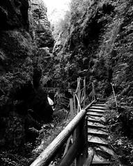 R6234225_medium_1400 (ThomasKrannich) Tags: austria carinthia raggaschlucht blackandwhite canyon monochrome nature nobody outdoor path trail
