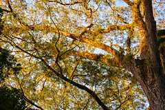 DSC_5371 (sergeysemendyaev) Tags: 2016 rio riodejaneiro brazil jardimbotanico botanicgarden     outdoor nature plants    green  beauty nikon